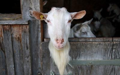 Agriculture paysanne, bio, raisonnée… Késako ??
