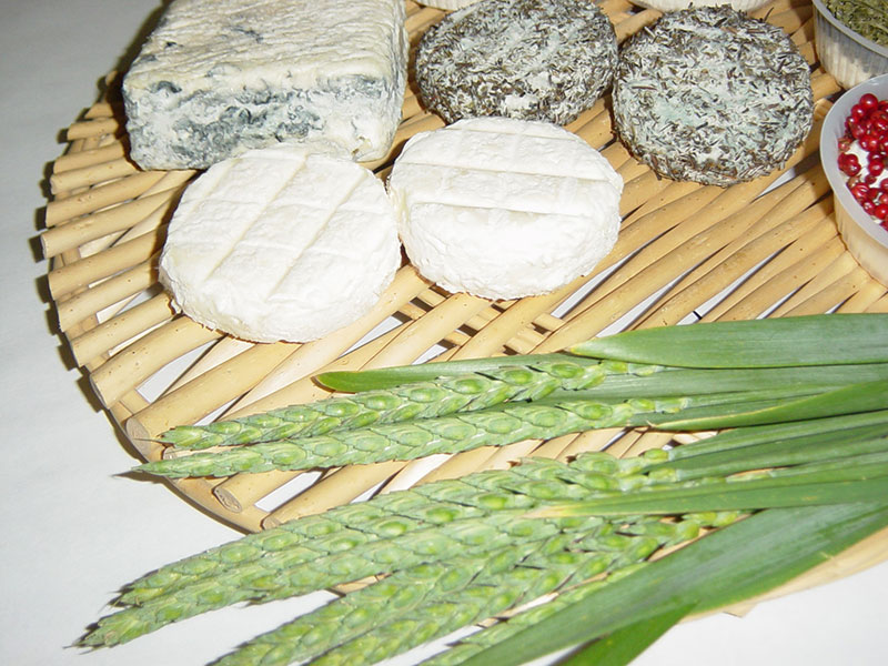 Gaec de Brette Vieille - fromage
