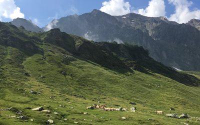La vie en Alpage